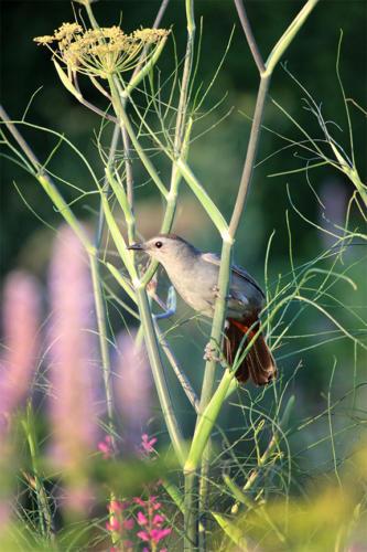 grey-bird-garden