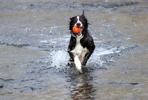 running-orange-ball-wet-dog