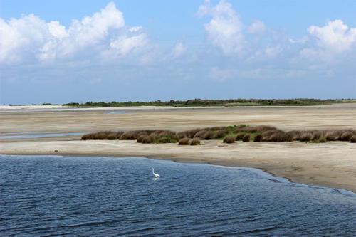 tidal-pool-dunes-egrette